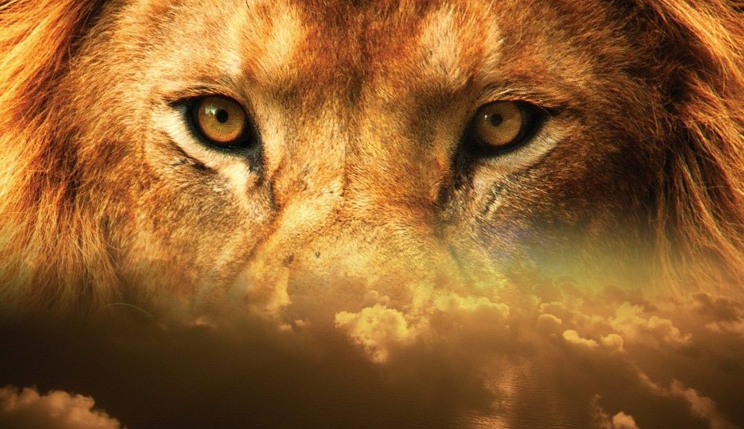 lion-judah