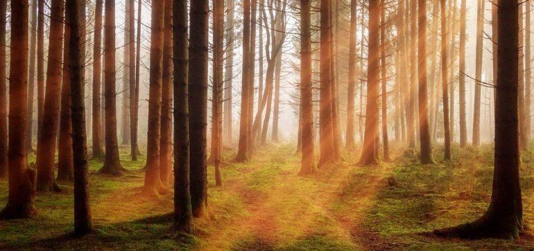forest-sunrise